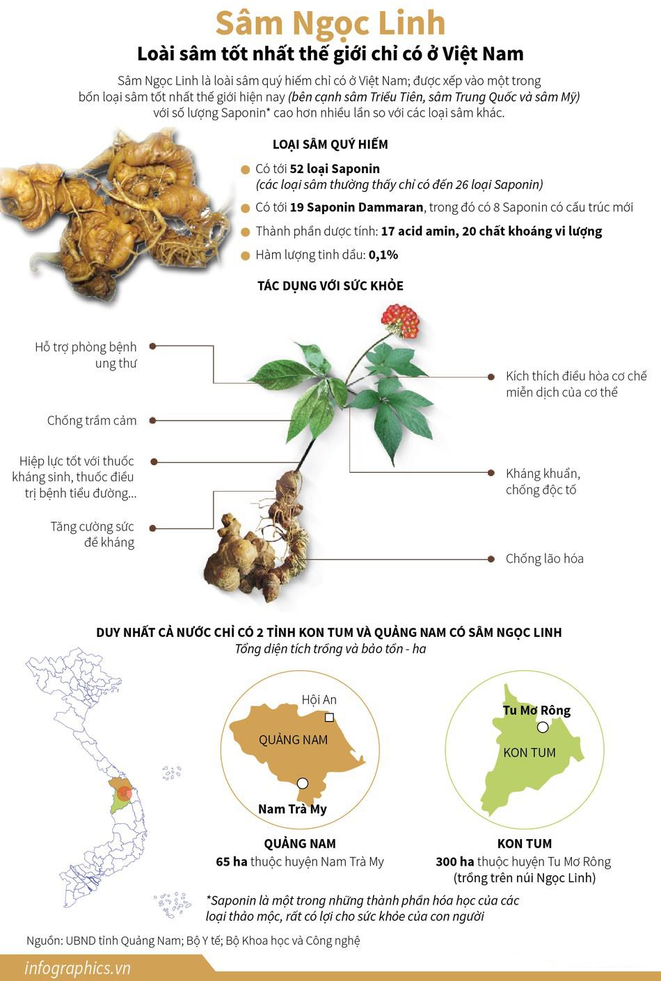 Việt Nam sở hữu loại sâm quý hiếm nhất thế giới